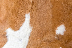 Brown cowskin Stock Photos
