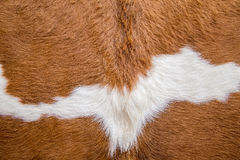 Brown cowskin Royalty Free Stock Photography