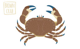 Brown crab, vector cartoon illustration Royalty Free Stock Images
