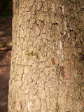 The Brown and Cracked Texture of Tree Bark up Close Royalty Free Stock Photography