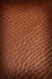 Brown crackled leather Royalty Free Stock Photo