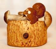 Brown cresce rapidamente em um coto, o conceito de uma estação do cogumelo Fotografia de Stock