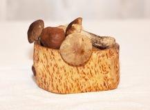 Brown cresce rapidamente em um coto, o conceito de uma estação do cogumelo Fotos de Stock Royalty Free