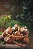 Brown cresce rapidamente em uma cesta em um coto de árvore Imagens de Stock
