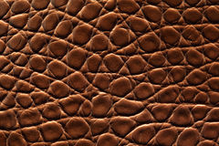 Brown crocodile leather. Textured background Stock Photography