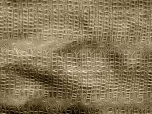 Brown crocodile leather. Bstract ancient animal Royalty Free Stock Images
