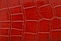 Brown crocodile leather Royalty Free Stock Images