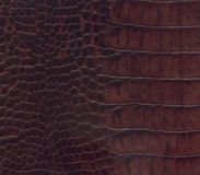 Brown crocodile leather texture Royalty Free Stock Image
