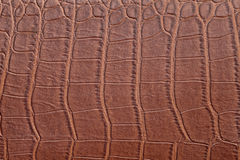 Brown crocodile skin Stock Images