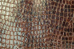 Brown crocodile texture. Close up Royalty Free Stock Image