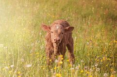 Brown Cub on Green Grass Field Royalty Free Stock Photography