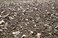 Brown cultivated field Royalty Free Stock Image