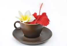 Brown cup and saucer with flowers frangipani and hibiscus Stock Photo
