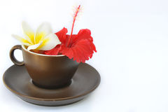 Brown cup and saucer with flowers frangipani and hibiscus Royalty Free Stock Images