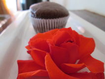 Brown Cupcake. A single undecorated brown cupcake Royalty Free Stock Images