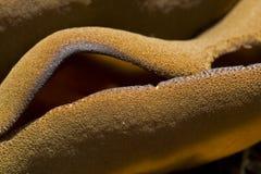 Brown-Cuppilz Lizenzfreies Stockfoto