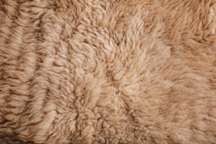Brown curled sheep fur texture as background Stock Images