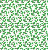Brown curly branches with green leaves seamless pattern Royalty Free Stock Image