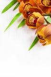 Brown Cymbidium kwitnie na białym tle Zdjęcia Royalty Free