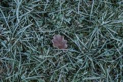 Brown dębu liścia lying on the beach w frosted trawie zdjęcia stock