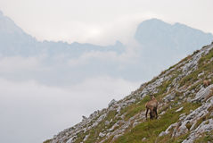 Brown Deer on Grass and Rocky Mountain during Day Time Royalty Free Stock Image