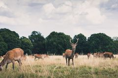 Brown Deer on Green Grass Field Under White Clouds and Blue Sky during Daytime Stock Photo
