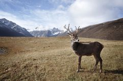 Brown Deer Standing on Field during Daylight Stock Image