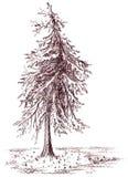 Brown depositou o esboço monocromático do sepia da árvore Imagens de Stock