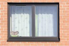 brown det plastic röda fönstret för katten Fotografering för Bildbyråer