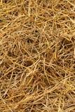 Brown di paglia di riso nel campo Immagine Stock