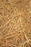 Brown di paglia di riso nel campo Fotografia Stock