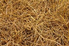 Brown di paglia di riso nel campo Fotografie Stock
