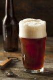 Brown di rinfresco Ale Beer fotografie stock