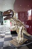 Brown-Dinosaurier-Porträt Stockfoto