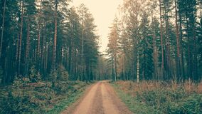 Brown Dirt Road Between Green Leaved Trees During Daytime Royalty Free Stock Images