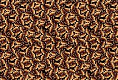 Brown ditsy wallpaper Stock Photo