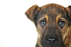 Brown dog Stock Photo