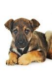 Brown dog Stock Photos