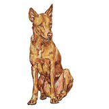 Brown dog. The dog is tired after finish playing Royalty Free Stock Image