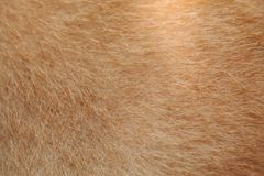 Brown dog of animals skin  for the design background.  Stock Photo