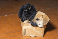 Brown dog and black cat. In a cardboard box Royalty Free Stock Image