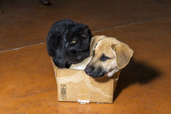 Brown dog and black cat. In a cardboard box Royalty Free Stock Photo
