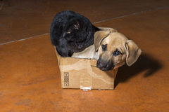 Brown dog and black cat. In a cardboard box Stock Photos