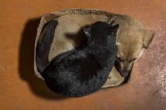 Brown dog and black cat. In a cardboard box Royalty Free Stock Photography
