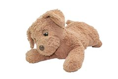 Brown dog doll. Isolated on white background Royalty Free Stock Photos