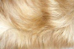 Brown dog fur background Stock Images