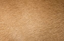 Brown dog fur texture or background. Macro shot Royalty Free Stock Images