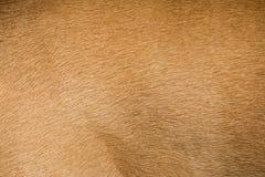 Brown dog fur texture or background. Macro shot Stock Photo