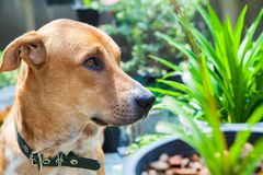 Brown dog in the garden. Close up Stock Images