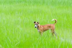 Brown dog on green grass field. Cute pet Royalty Free Stock Image